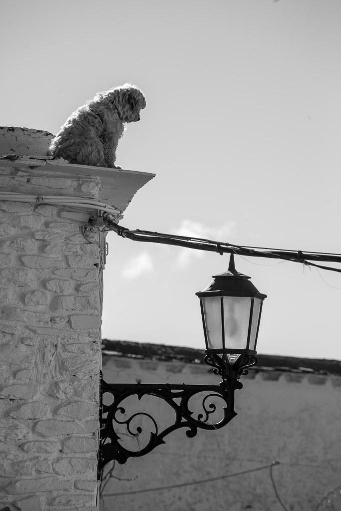 Perrito suicida